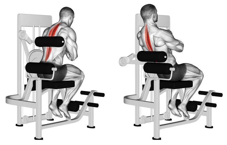 Lever Back Extension