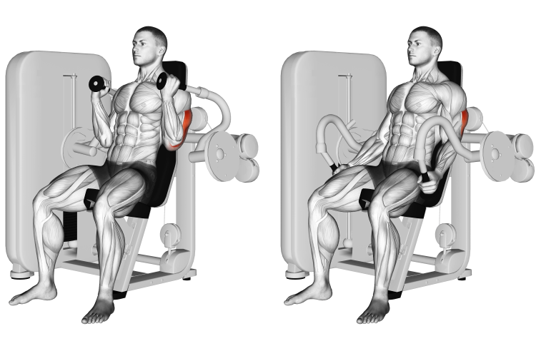 Lever Triceps Extension (neutral grip)
