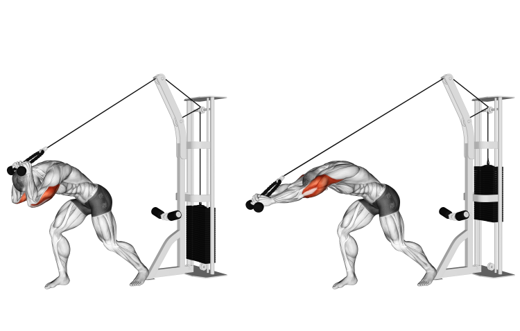 Cable Rope High Pulley Overhead Triceps Extension