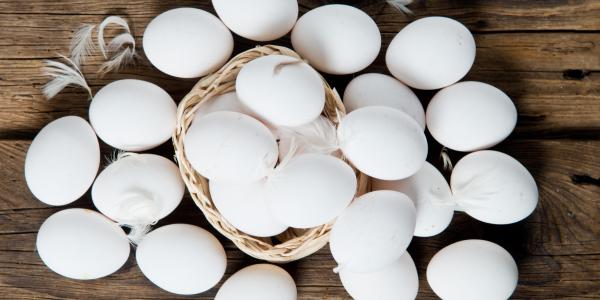 Chicken egg white (boiled)