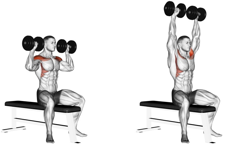 Dumbbell Bench Seated Press