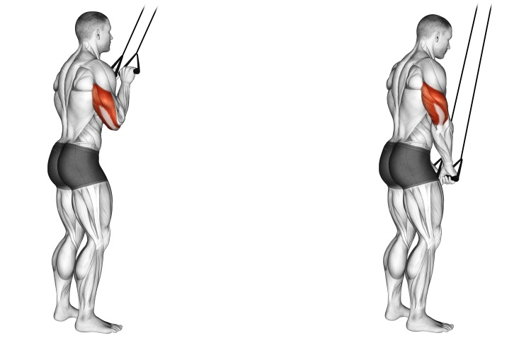 Band Triceps Pushdown