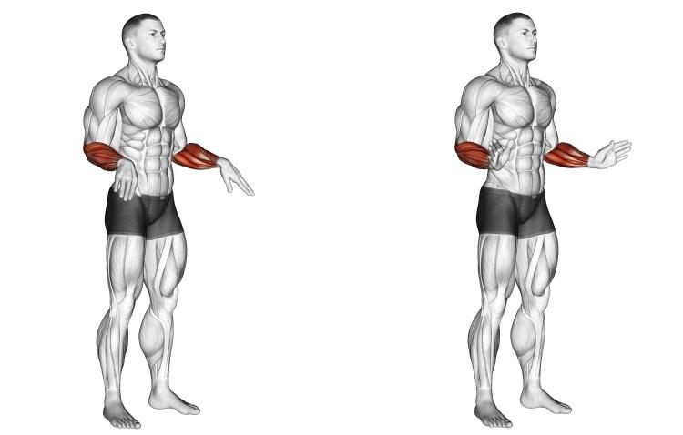 Stretching - Wrist Circles