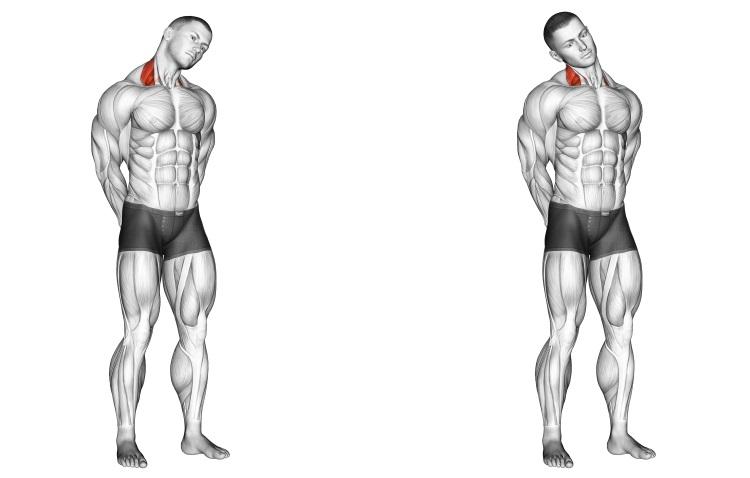 Stretching - Neck Side Stretch