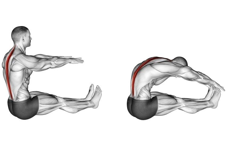 Stretching - Spine Stretch