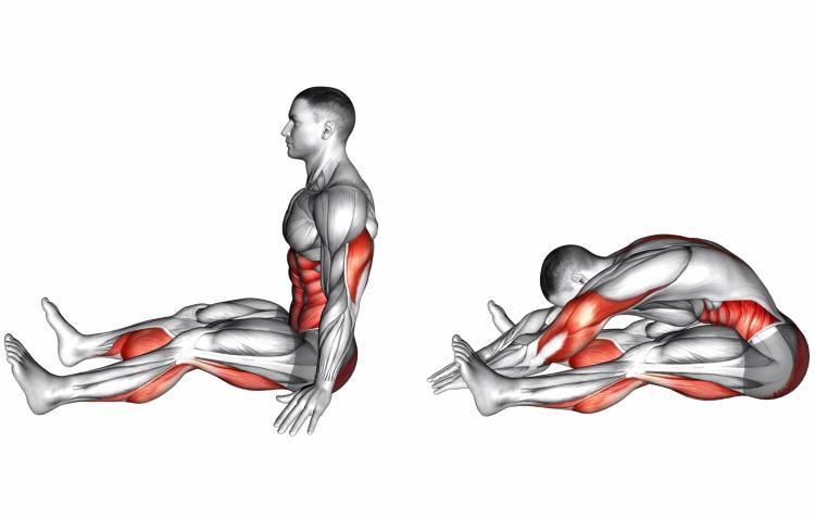 Stretching - Spine Stretch Forward