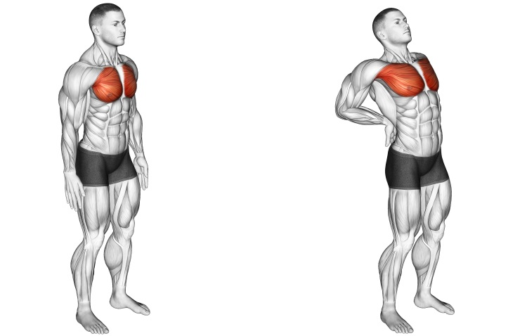 Stretching - Elbows Back Stretch