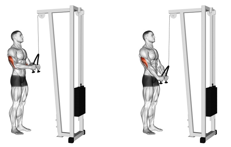Cable Pushdown (rope attachment)