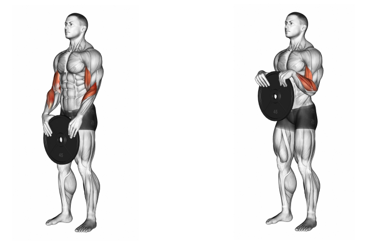 Weighted Standing Curl (weights or lever)