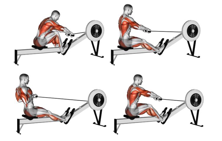 Rowing Machine (normal grip)