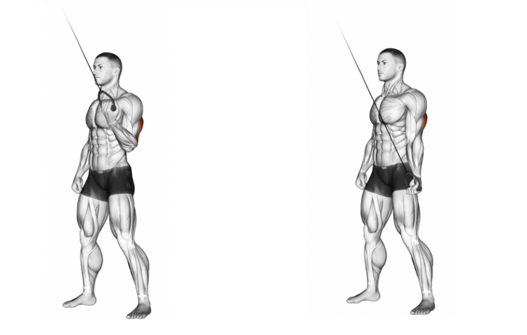 Cable Standing One Arm Triceps Extension