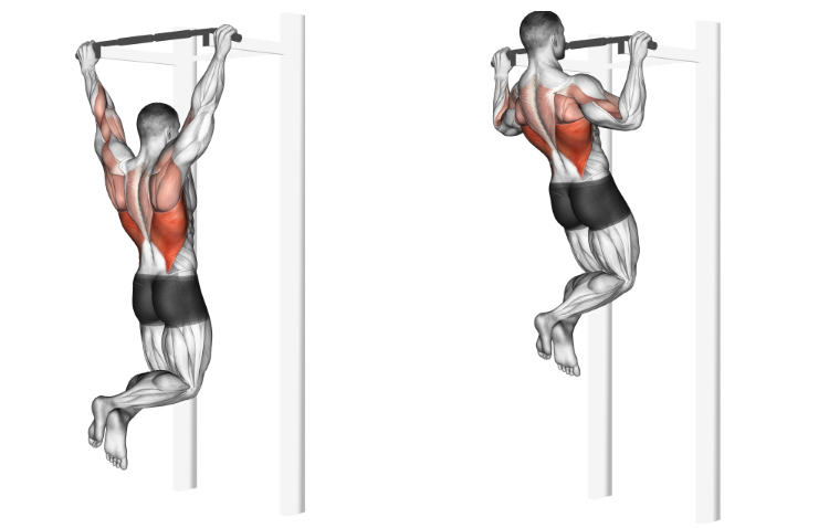 Pull-up (wide front grip)