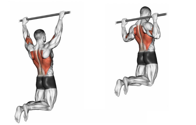 Pull-up (wide back grip)