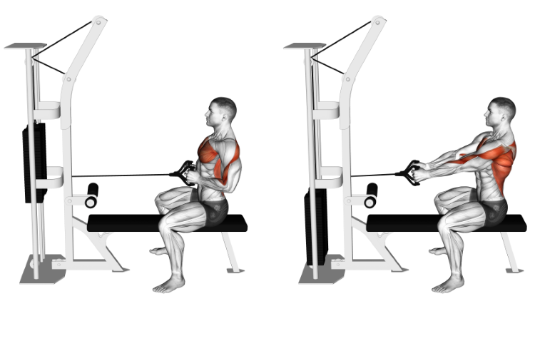 Cable Straight Back Seated Row (V-grip)